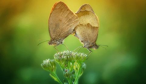 Arkadiusz Makowski Shoots Radiant Photos of Butterflies