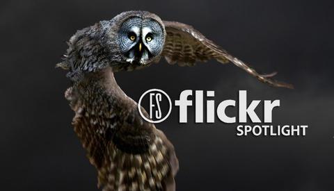 20 Unique Images Of Birds