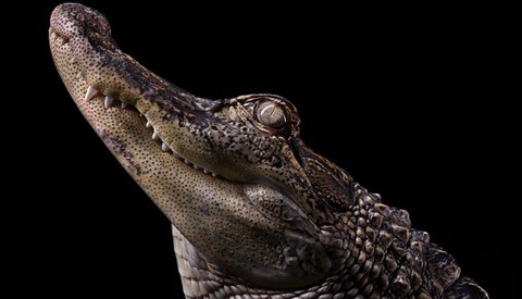 Go Behind The Scenes With Brad Wilson As He Creates Incredible Portraits Of Live Animals