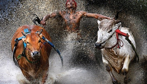 Winners of the 2013 World Press Photo Contest Announced – Some NSFW