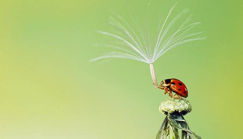 The 2013 Sony World Photography Competition is Narrowing Down