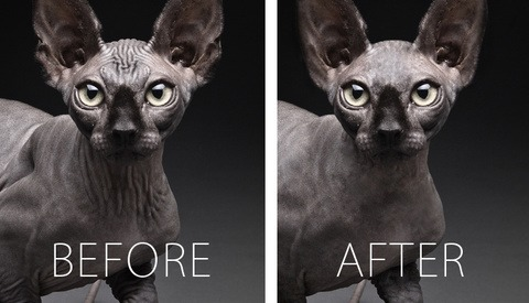 18 Animated Gifs of Professionally Retouched Cats