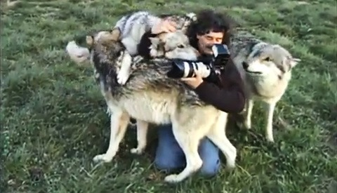 Wildlife Photographer Charms a Wolf Pack