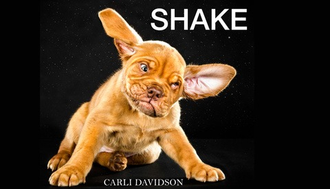 """Must Read: Carli Davidson's """"SHAKE"""" is a Glorious Compilation of Dog Cuteness"""