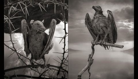 Nick Brandt Captures the Beauty in These Deceased, Calcified Animals