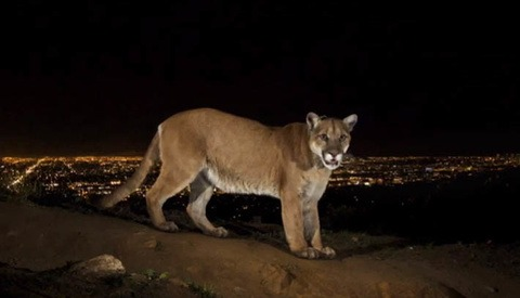 BTS: Capturing Hollywood's Cougars On The Prowl Over Los Angeles