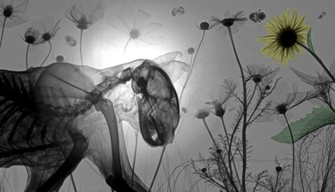 X-Ray Photographs Provide a Glimpse into the Complexity of Nature