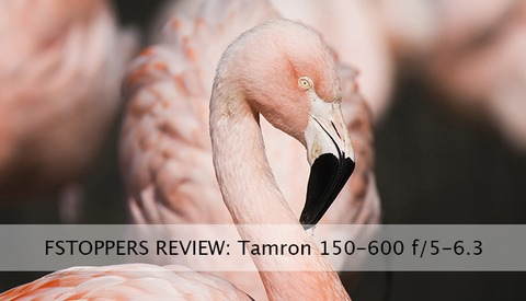 Field Testing Tamron's 150-600mm f/5.0-6.3 Proves a Positive Experience