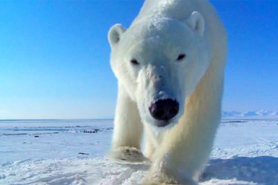 How Wildlife Filmmakers Are Getting Closer Than Ever Before