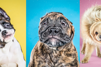 """Prepare For an Onslaught of Cute: Carli Davidson's """"Shake"""" Series is Back... with Puppies!"""