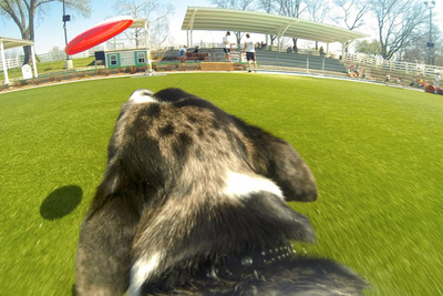 How to Strap a GoPro to Your Dog and Capture Their Antics