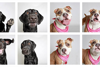 This 'Doggie Photobooth' Captures Amazingly Candid Images of Dogs That Need a Home