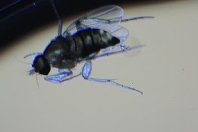LensRentals Crew Finds Fly Inside of Weather Sealed Lens