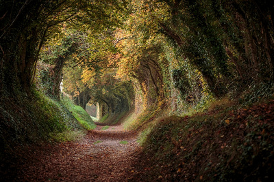 Nature Photo Contest: Win a Canon 5D MK III or Nikon D800
