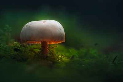 Those Glowing Mushrooms (Part 2): 7 Steps to Processing Your Own Fantasy World