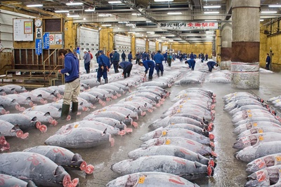 Experience Photographing the Tokyo Fish Market Before History Disappears