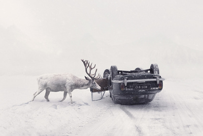 From Rescued Animals to Art - Photographer Captures Relationships of Rescued Wild Animals and Humans