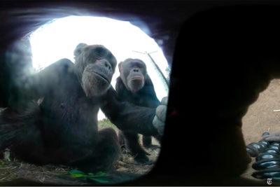 Chimp Steals 360-Degree Camera, Hilarious Selfie Session Ensues