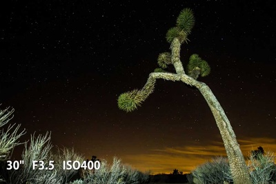 joshua tree under night sky