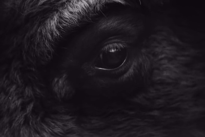 25-Year-Old Photographer Goes on the Hunt for the Perfect Wild Bison Picture