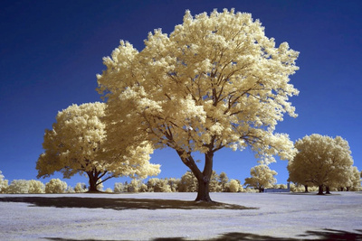 An Introduction to Shooting and Processing Infrared Photographs