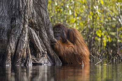 National Geographic's Nature Photographer of the Year
