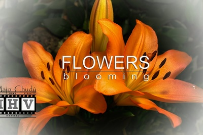 These Time Lapses of Flowers Blooming Are Mesmerizing