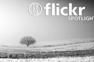 [Pics] Flickr Spotlight – Lonely Trees