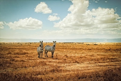 Justin Carrasquillo's Breathtaking African Landscapes