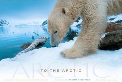BTSV Polar Bear Photography with Florian Schulz