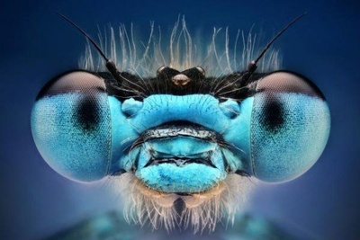 Glamour Shots, Insect Style