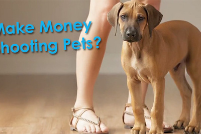 How To Make Money Photographing Other People's Pets