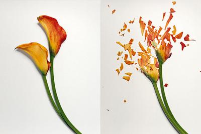 Freeze Flowers, Smash Flowers, Photograph Flowers