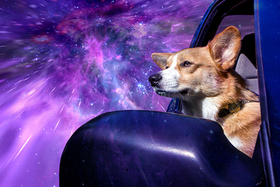 Warp Dogs: Pooches Traveling at Lightspeed
