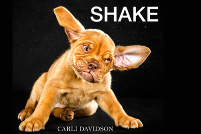 "Must Read: Carli Davidson's ""SHAKE"" is a Glorious Compilation of Dog Cuteness"