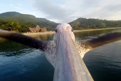This Pelican Took One Of The Most Beautiful Bird's-eye View Videos Of All Time