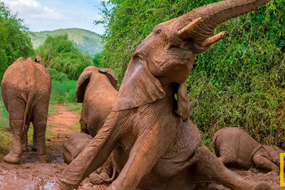 (Graphic) National Geographic Live! : Photographing Africa's Wildest Beasts