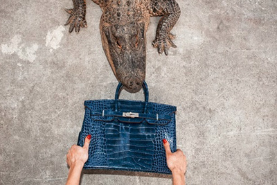 Photographer Feeds $100k Purse To An Alligator For The Sake Of Art
