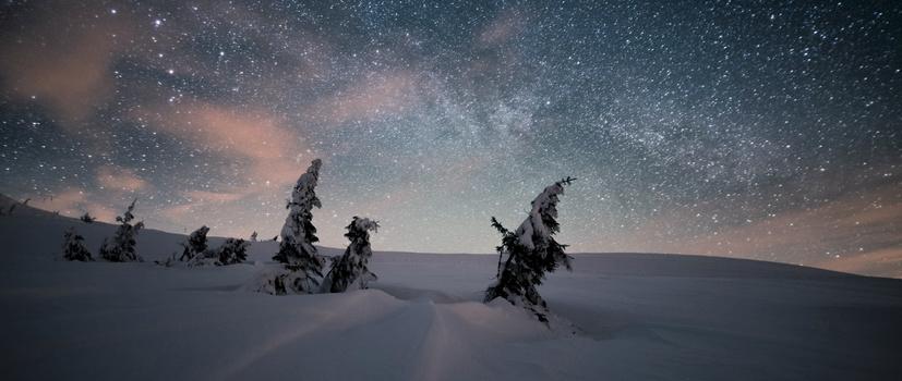 trees and stars morten rustad