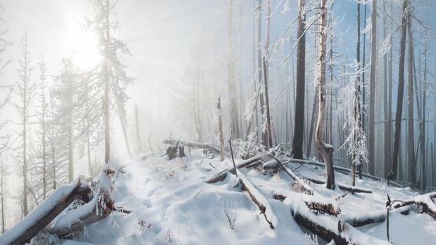 Winter forest scene on Mt.Hood in Oregon State