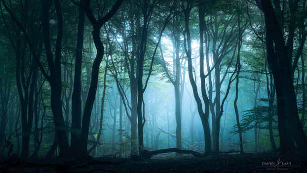 Leviathan - A moody morning in the forest - photograph by Laanscapes