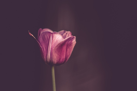 photo flower petals