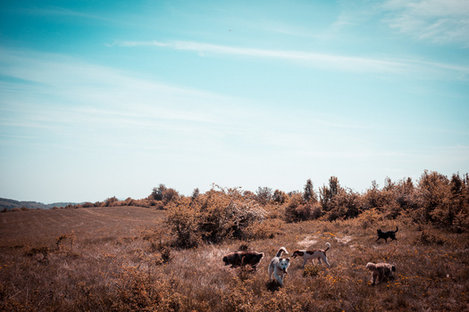 dogs in a field lightroom presets to make your photos pop