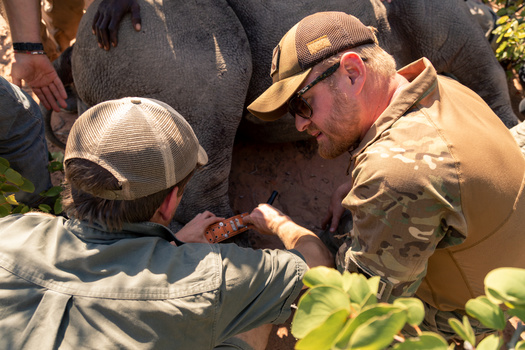 Conservation in action. Photographing the critically endangered Black Rhino.