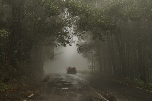 a car driving into a lush, foggy forest