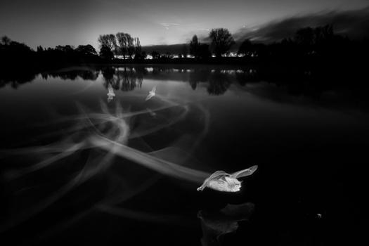 Bats shot using infrared photography