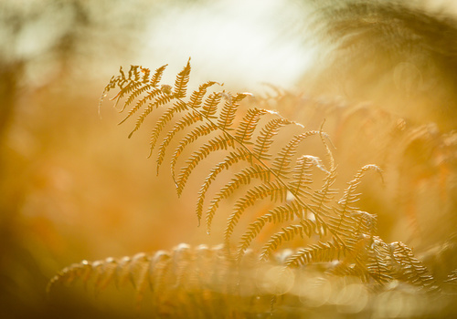 Flares in landscapes can be tricky. When photographing details the use of flare can be put into your advantage.