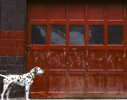 patrick-cone-photograph-dog-garage-color