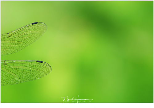 The wings of a dragonfly with a soft out of focus background due to a small depth of field. Because the surrounding are unrecognizable this is clearly not a landscape of course (EOS 5D3 + EF100L | ISO100 | f/4,5 | 1/30)
