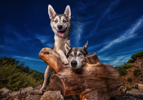 pet-photography-tips